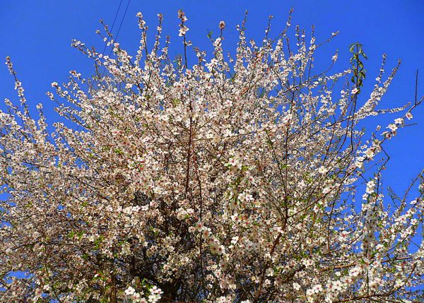 Frühlingswanderung im Hinterland