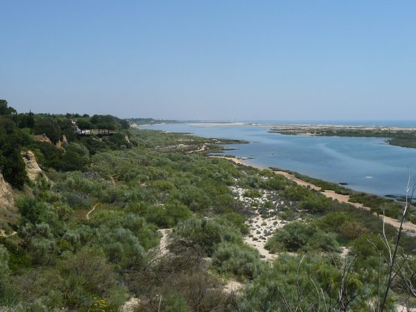 Vogelparadies Ost-Algarve
