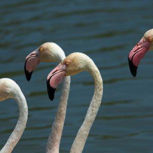 Wanderung Naturschutzgebiet Ria Formosa